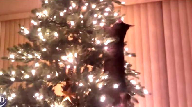 Hilarant quand les chats s attaquent nos sapins de no l - Quand faire le sapin de noel ...