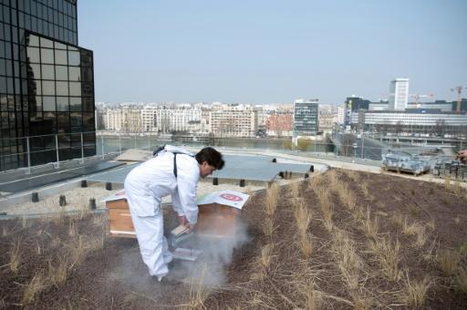 La toiture v g talis e source de soucis juridiques rtl info - Toiture vegetalisee paris ...