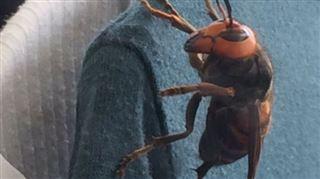 Elle découvre un énorme insecte dans sa garde-robe (photos) 5
