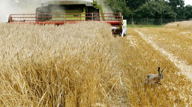recherche agriculteur celibataire Narbonne