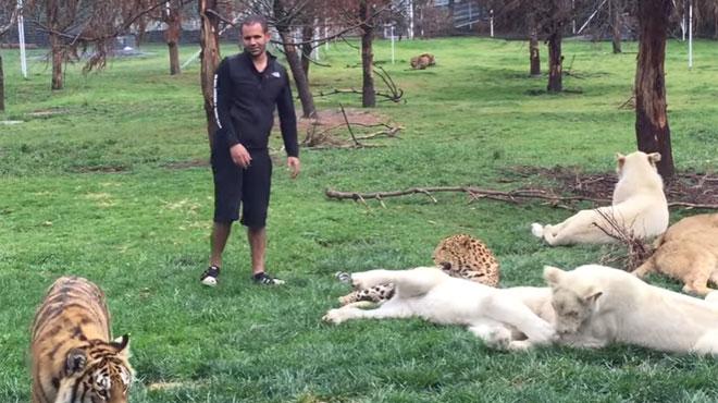 ce tigre emp che un jaguar d 39 attaquer un homme vid o rtl people. Black Bedroom Furniture Sets. Home Design Ideas