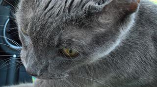 Ce chat mourant tient la main de son maître lors de son dernier trajet chez le vétérinaire (photo) 3