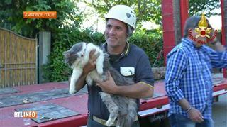 Retrouvé sain et sauf, ce chat a passé 32 jours dans les décombres d'une maison détruite par un tremblement de terre (vidéo) 5