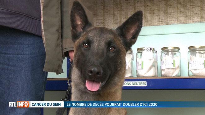 Les tumeurs cancéreuses bientôt détectées par des chiens renifleurs?