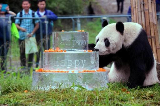 Le plus vieux panda au monde est mort — Pan Pan