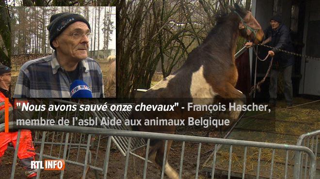 Horrible maltraitance animale à Graide- Il y avait des chevaux morts accrochés aux barbelés 1