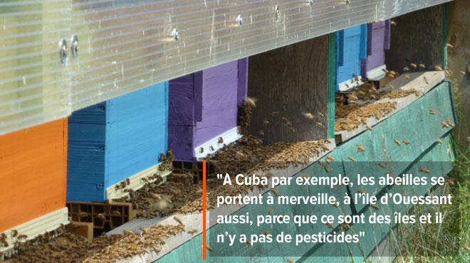 Fin de l'hiver, les abeilles vont se réveiller: le point avec Frédéric sur les menaces qui pèsent sur elles