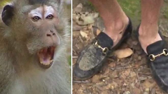 Des mocassins Gucci à 500 euros pour affronter la jungle: un candidat de Koh Lanta devient la risée de Twitter (vidéo)