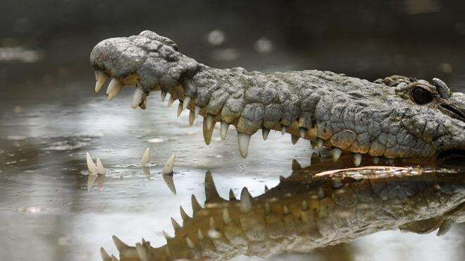 Un joueur de foot tué par un crocodile en plein entraînement