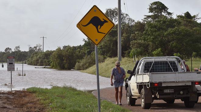Un requin-bouledogue au milieu de la route — Inondations en Australie