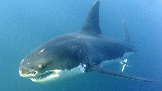 Australie: une surfeuse tuée par un requin devant sa famille