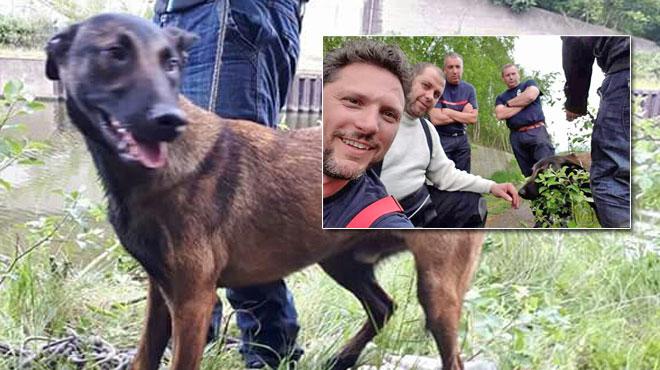 Jaco, un jeune berger malinois, pris au piège dans le canal à Charleroi: son sauveur témoigne