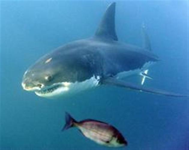 Un requin de 2 m se jette sur lui — Australie