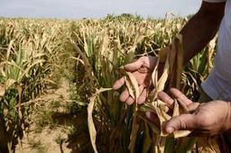 Les inquiétudes sont vives dans le milieu agricole en raison de la sécheresse