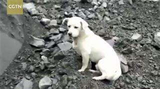 Son maître enseveli par un éboulement, ce chien refuse de quitter les lieux du drame 5