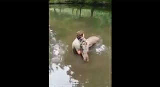 Sylvia, l'élan de Forestia, secourue alors qu'elle s'endormait dans l'étang du parc- J'ai maintenu sa tête hors de l'eau pour ne pas qu'elle se noie (vidéo) 4