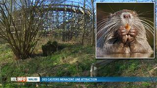 Walibi a enfin trouvé la solution pour éloigner les castors qui menacent les attractions 5