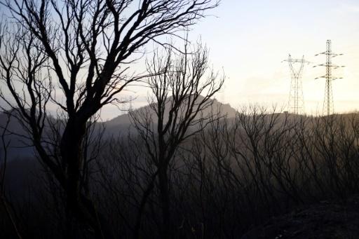 Haute-Corse un incendie parcourt près de 100 hectares de végétation